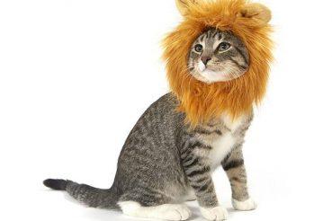Lion_Looking_Up_grande