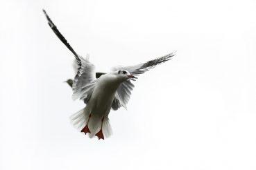 it__s_called_freedom_by_macinecko-d4jcgl5